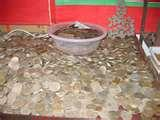 Silver Eagle Coin Sell images